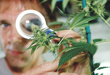 Peticiju za legalizaciju marihuane do danas podržalo 3.000 ljudi