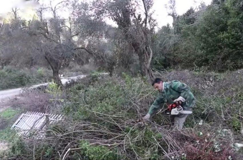 Porodica Lazović sa puno ljubavi i entuzijazma pristupila čišćenju oduzetog maslinjaka u Valdanosu