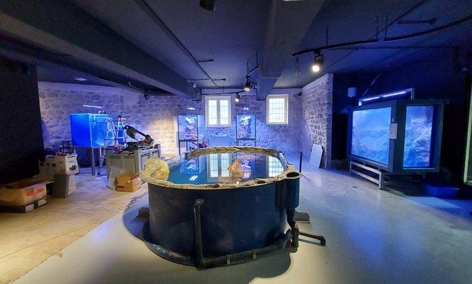 Otvaranje prvog crnogorskog akvarijuma u martu ili aprilu
