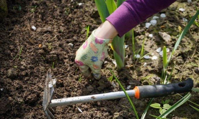 Hobi će vam razvedriti tmurnu svakodnevicu: Rad u bašti opušta, a evo šta reguliše krvni pritsak