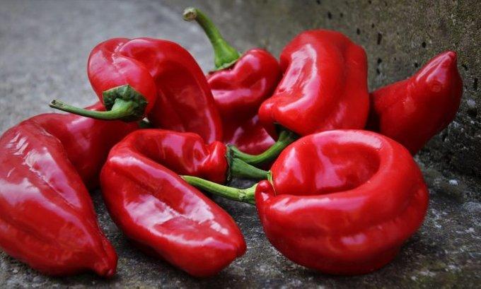Crvena, zelena, babura ili ljuta – paprika je čisto zdravlje u tanjiru